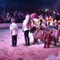 zirkus_vorstellung-20